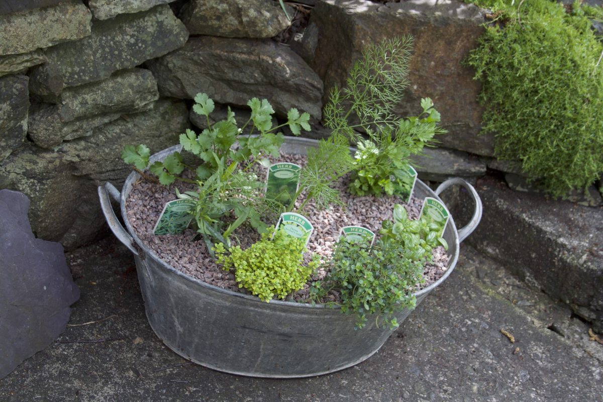Clydfan Cottage plant pot